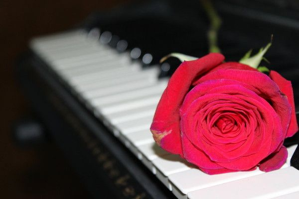 Piano avec rose rouge