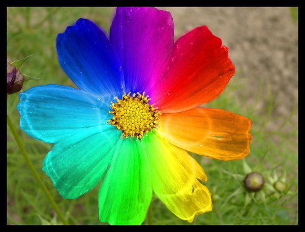 Jolie Fleur En Couleur